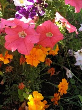 Flowerface ._.