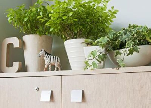 Plants For Kitchen To Decorate It: Plants Above Cabinets