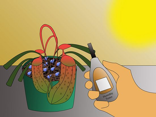 How to Grow Pitcher Plants: 9 Steps (with Pictures) - wikiHow
