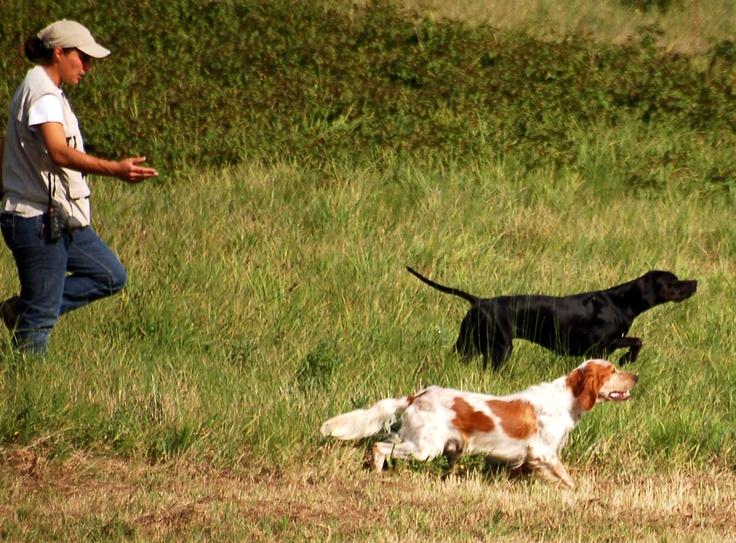 Des chiens heureux...