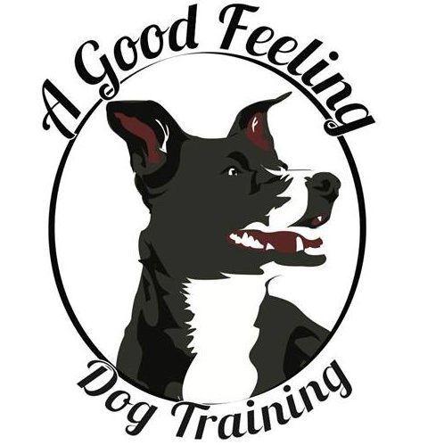 A Good Feeling Dog Training Denver Co Dog Enrichment Diy Dog