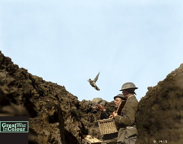 Two soldiers release a pigeon with a message from their trench. Taken May 1917.