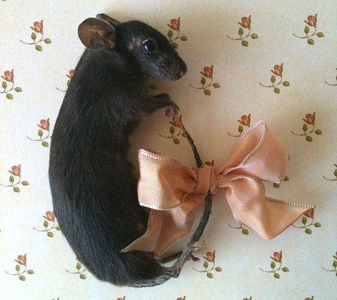 taxidermy mouse brooch.   Happy Mother's Day!
