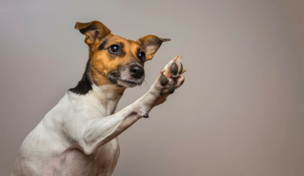20 Unusual tricks you should start teaching your dog. Includes crawl, close/open door, put toys away.