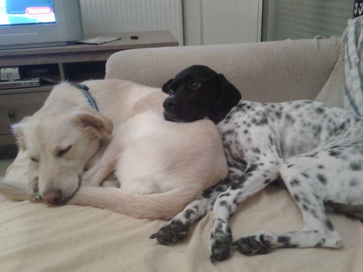 Billie Jean with her best friend, Cookie!