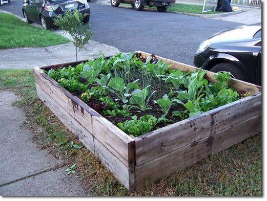Best 25 Cheap Raised Garden Beds Ideas On Pinterest Raised Gardens Diy Raised Garden Beds