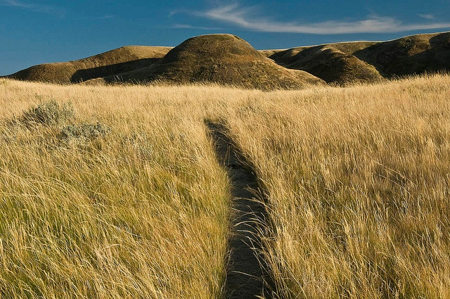 This is the main hiking trail to 70 Mile Butte, the highest point in Grasslands National Park, Saskatchewan. SEPTEMBER