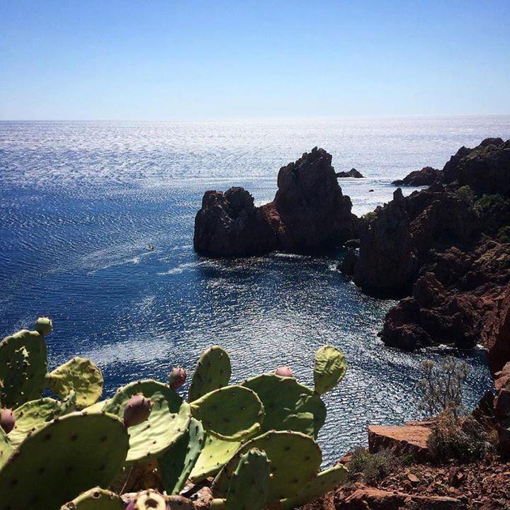 C'est beau mais ça pique au cap Dramont #balade #littoral #cactus #vue #mer #rochers #promenade #agay #var #provence #cotedazur #france #southoffrance #crique #creek #sea #coast #frenchriviera #meer #mare #visitvar #visitesterel #levarois http://ift.tt/2xbsQDI