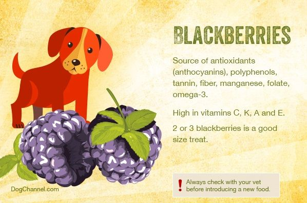 Dogs and Blackberries