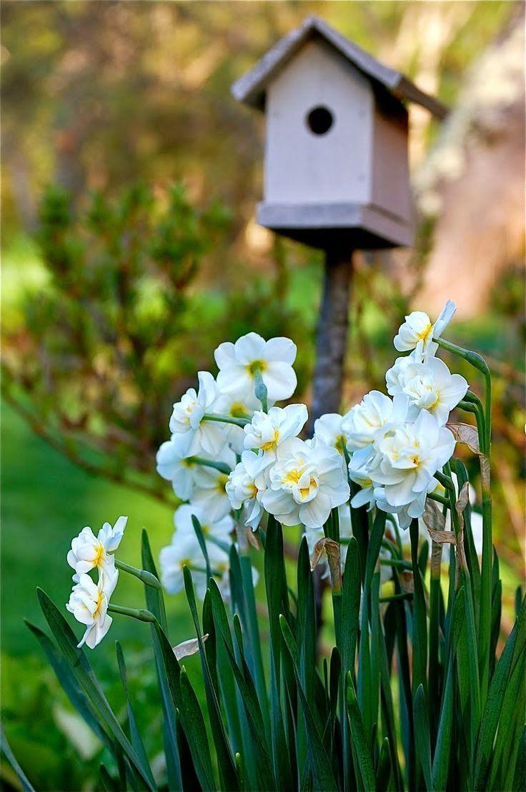 best Garden Calendar images on Pinterest Vegetable garden