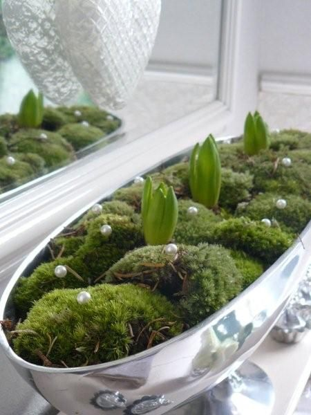 Moss & Hyacinths in an oval silver dish for Christmas | From THE ESSENCE OF THE GOOD LIFE™    http://www.pinterest.com/ConceptDesigner/   https://www.facebook.com/pages/The-Essence-of-the-Good-Life/367136923392157