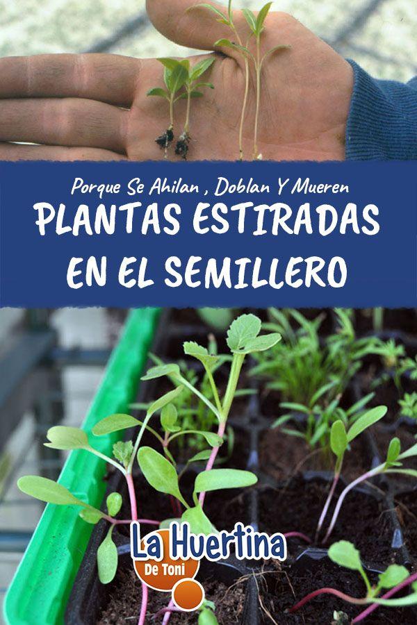 Pin En Cuidados Del Huerto Y Plantas