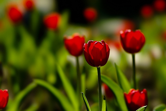 Flowers are the sweetest things God ever made, and forgot to put a soul into