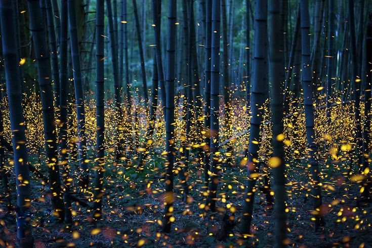 Dragonswood (Original Description: Fireflies just above the ground by Nomiyama Kei)
