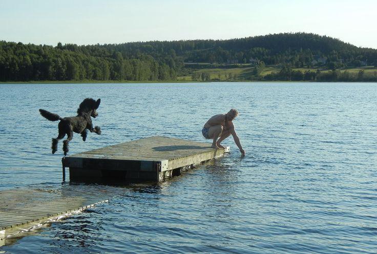Jag heter Carina och är 49 år gammal/ung och kommer från en liten by i Västernorrland och älskar att knäppa kort...  Denna blogg handlar om mitt liv och vad allt det innebär. Mina underbara hundar Royce & Kuro och en massa annat såklart (som hundar/pudlar, böcker, vår husbil, resor, huset, min dotter och sist men absolut inte minst...min underbara Jocke).   Välkommen in till min lilla värld!