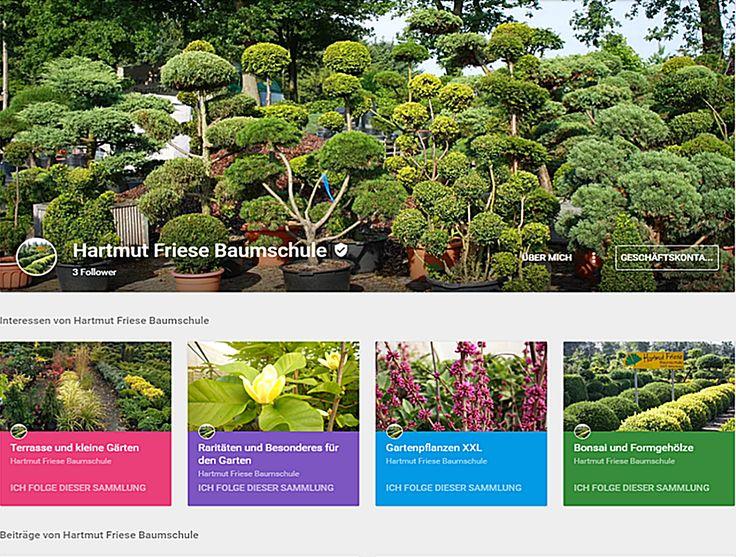 28 best ammerland formgeh lze bonsai rund um die welt images on pinterest bonsai string. Black Bedroom Furniture Sets. Home Design Ideas