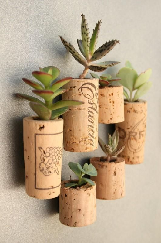 "Succulents planted in hollowed out wine corks! Hot glue a thumb tack to one side and you can arrange your ""garden"" on a bulletin board! Glue a strong magnet to one side and you have a hanging garden for you metal cubicle at the office! Or just pierce a little hole in the cork, hammer a tiny nail into your walls and hang your garden there!"