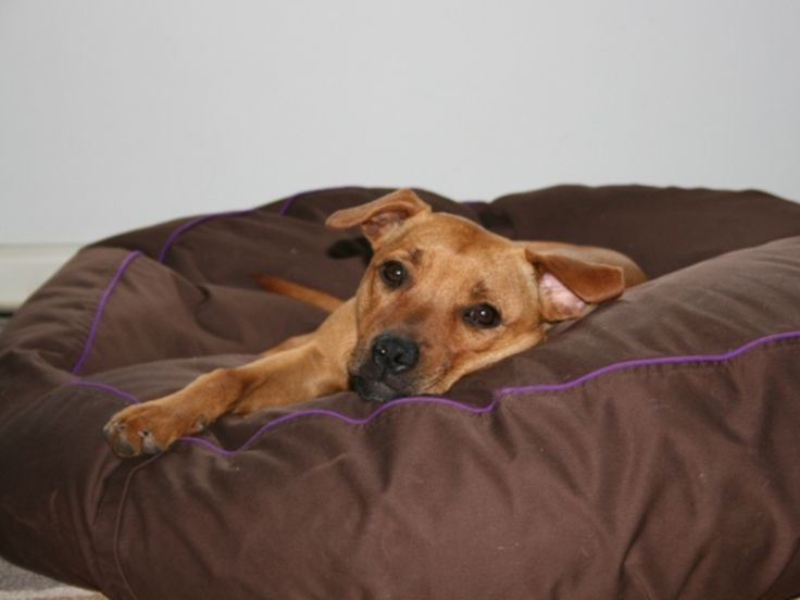 No longer unsure. Bindi is very comfy on her new dog bed www.barkaparka.com.au