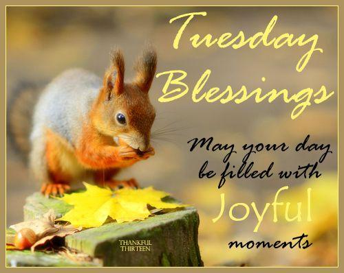 Картинки по запросу tuesday greetings