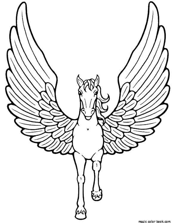 Pin By P P On C Of N Mn Horse Coloring Pages Unicorn Coloring