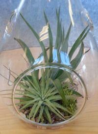 Buy Plants Online; Canadian Hardy Succulents