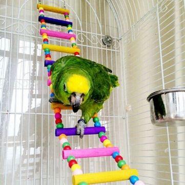 Bird Parrot Stand Holder