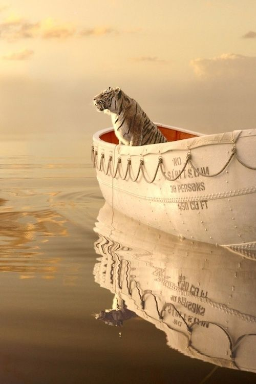 """""""...animals don't escape from somewhere but from something.""""  Yann Martel, Life of Pi"""