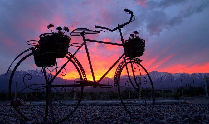Con esta imagen de un paseo en bicicleta por el #ValleDeUco les deseamos ¡buenas noches! #MIOwines #Mendoza #Viñedo
