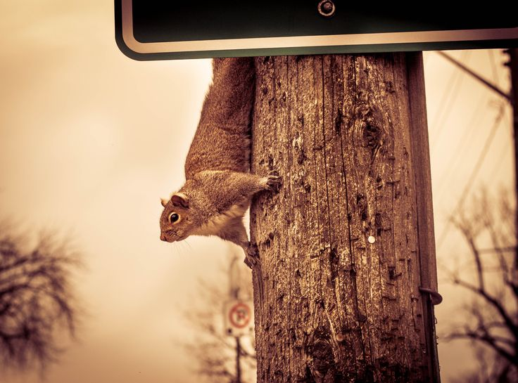 A day out in historic #Cobourg #Ontario. #Nature #Wildlife #Squirrel