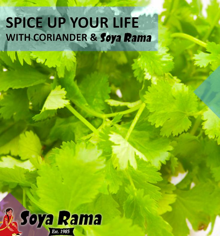 Coriander is rich in nutrients and packs a delicious punch when added to spicy dishes.  You should definitely try this tasty herb with your next delish Soya Rama dish!  #Deliciousherbs #SpiceupyourlifewithSoyaRama