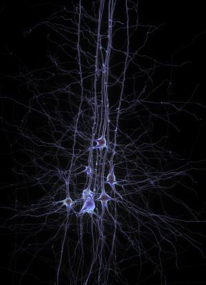 Illuminating neuron activity in 3-D  Researchers at MIT and the University of Vienna have created an imaging system that reveals neural activity throughout the brains of living animals. This technique, the first that can generate 3-D movies of entire brains at the millisecond timescale, could help scientists discover how neuronal networks process sensory information and generate behavior.
