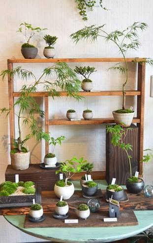 bonsai×樹と環