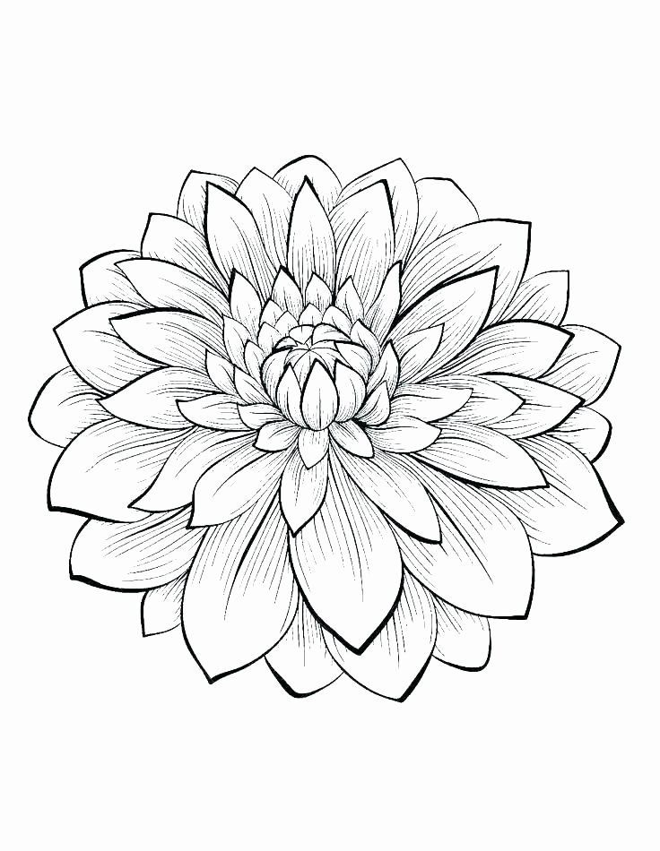 Single Flower Coloring Pages Luxury Single Flower Coloring Pages At Getcolorings Buku Mewarnai Sketsa Bunga Teratai
