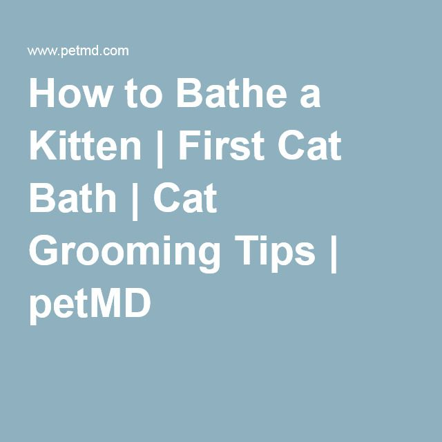 How to Bathe a Kitten | First Cat Bath | Cat Grooming Tips | petMD