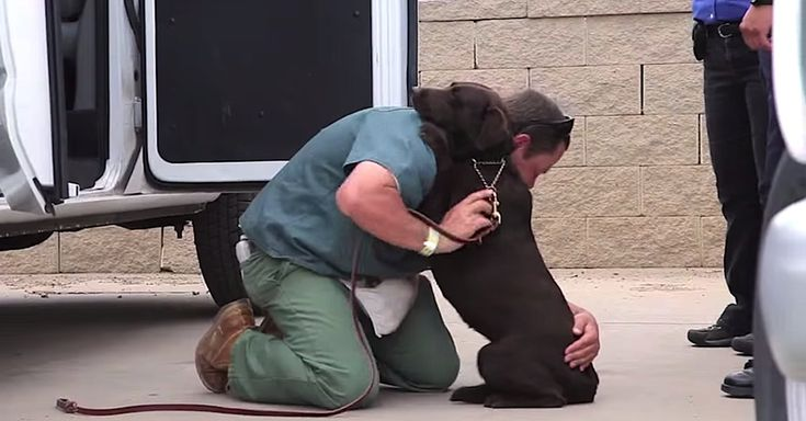 A Tough Prison Inmate Raised This Dog, But Watch What Happens When He Says Goodbye via LittleThings.com