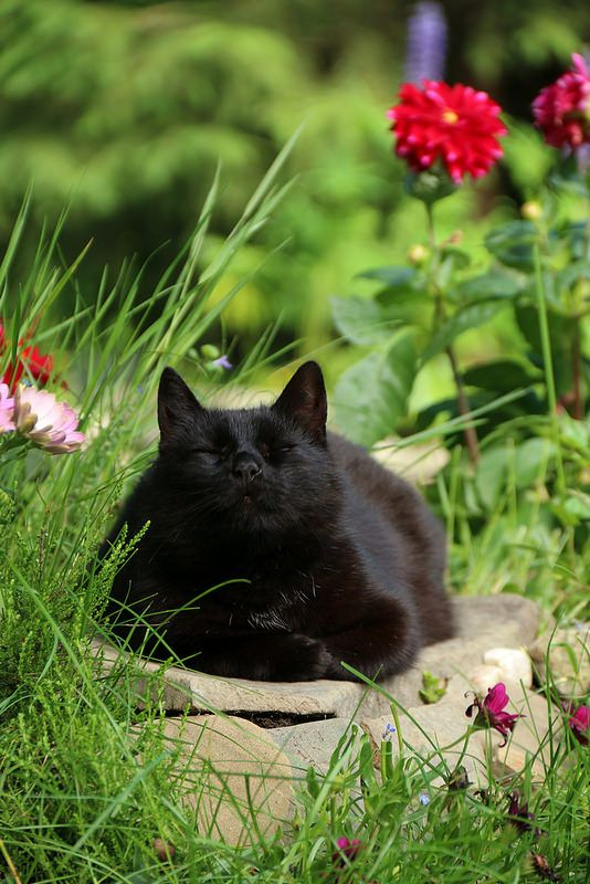 What a beautiful and sweet looking face!! Our handsome black kitty boy was so lovable and a total sweet purr machine.