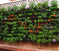 140 best Vertical gardens images on Pinterest Vertical gardens