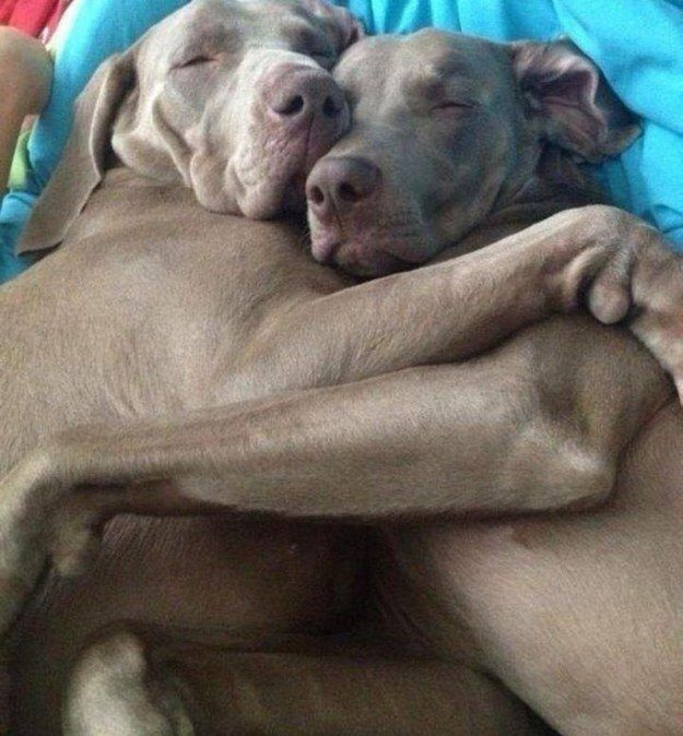 These flawless napping buddies. | 21 Incredibly Adorable Animals With Their Best Friends