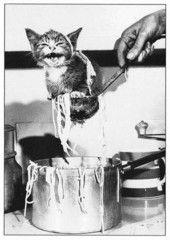 Kissa spagetissa | Perromania - pieni postikorttikauppa
