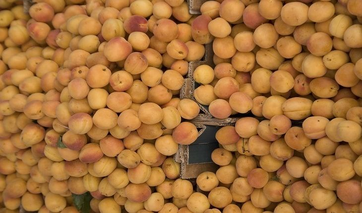 Learn about the potential health benefits of Apricot - Prunus Armeniaca (Jardalu, Khubani, Khumani) including Apricot nutrition facts & medicinal uses (contains thiamine).
