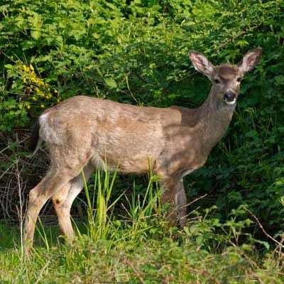 Photo: Derek Coetzee | thisoldhouse.com | from 20 Ways to Keep Deer Out of Your Yard