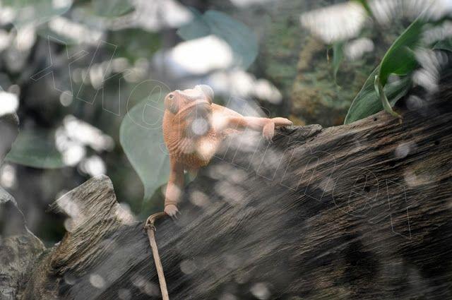 #zoo #wroclaw #polska #poland #kameleon #chameleon