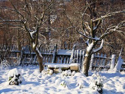 Садовые вредители: где зимуют и как их обезвредить