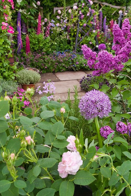 Fragrance Garden: Roses, Lilacs, Allium, Phlox, Rosmarinus herb rosemary, Flower Garden in June garden scene with stone walkway, Clematis vine on trellis, Lupines, Syringa, Rosa, pots of herbs, for a wonderful lush fragrant cottage cutting garden