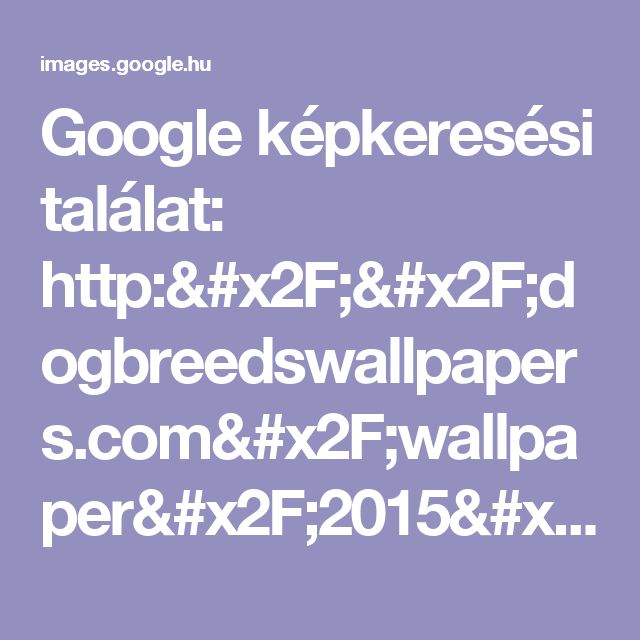 Google képkeresési találat: http://dogbreedswallpapers.com/wallpaper/2015/05/maltese-pomeranian-mix-puppies-for-sale-17-background.jpg