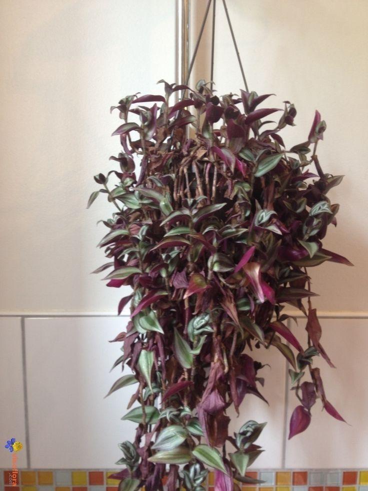 Les 25 meilleures id es de la cat gorie plantes - Arrosage orchidee d interieur ...