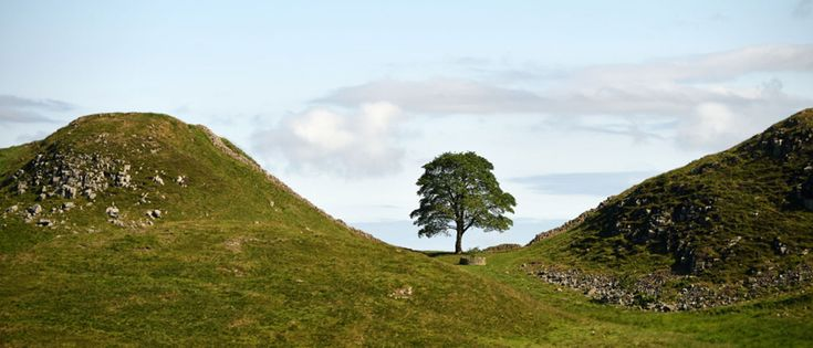Steel Rigg and Sycamore Gap | Visit Hadrian's Wall