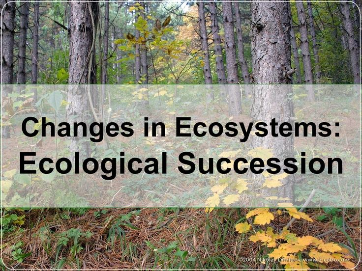 ecological-successions