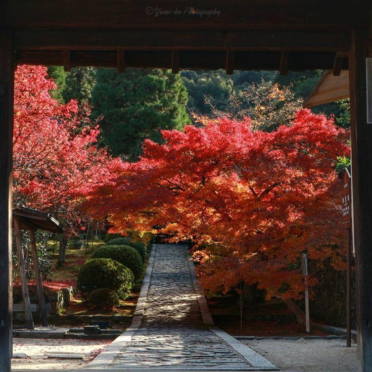 酬恩庵一休寺 2016🍁 . 昨日の一休寺参道🎶 . 一休寺は例年、京都市内より色付きが遅く、一休禅師の命日にあたる11月21日頃が見頃なんだそう。 今年はちょっと早く、既に一部散りはじめてますがまだ十分楽しめました😳念願の一休さんに会えて幸せ😌 . 今は清水寺に来てますがまだまだ楽しめるくらい紅葉たくさん残ってます🎶ただ、舞台の周りの紅葉は今夜から明日の雨で散ってしまうかも?😅 . Location: 京都府 Kyoto, Japan . #一休寺 #酬恩庵 #酬恩庵一休寺 #一休さん #一休禅師 #京都 #紅葉 #はなまっぷ紅葉2016 #team_jp_秋色2016 #wp_紅葉2016 #jhp秋色 #lovers_nippon_2016秋 #wu_asia #best_streetview #loves_asia #bns_asian #loves_united_asia #ig_today #ig_dynamic #ig_worldclub #excellent_nature #nature_brilliance…