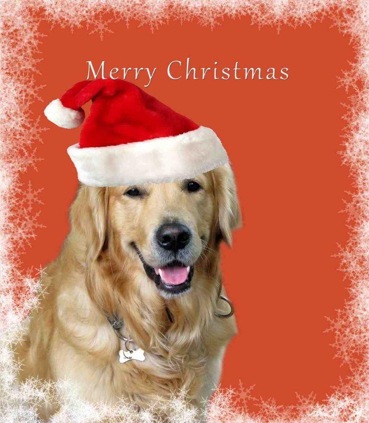 New Post-merry christmas funny dog-Trendingcheminee.info